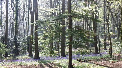 Photograph - Bluebells Photo 4 by Harry Potter
