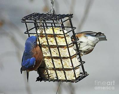 Photograph - Bluebird 45 by Lizi Beard-Ward