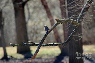 Photograph - Bluebird, Bluebird, Sing To Me by Karen Adams