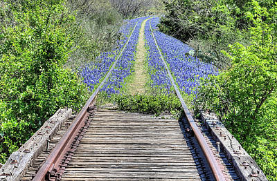 Photograph - Bluebonnet Path by JC Findley