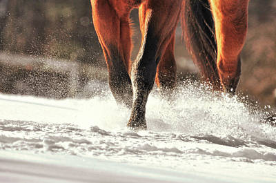 Blustery Trot Art Print by JAMART Photography