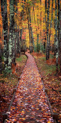 Photograph - Boardwalk Of Leaves by Darylann Leonard Photography