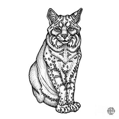Drawing - Bobcat by Amy E Fraser