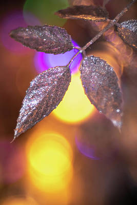 Photograph - Bokeh Leaf by Brian Hale