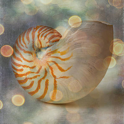Photograph - Bokeh Nautilus Shell by Garry Gay