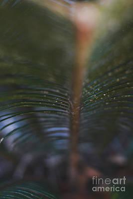 Photograph - Bokeh Sparkles - Macro by Adrian DeLeon