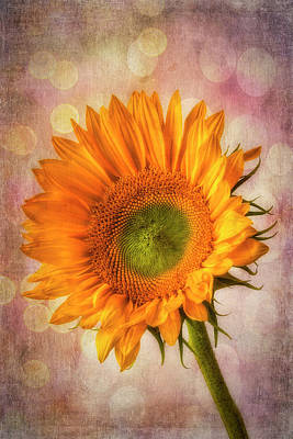 Photograph - Bokeh Sunflower by Garry Gay