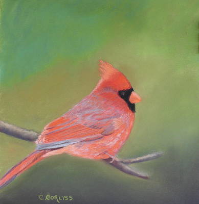 Pastel - Bonded Pair - Male Cardinal by Carol Corliss