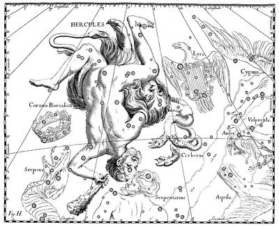 Drawing - Boreal Constellations Of Hercules And Cerberus by Johann Hevelius