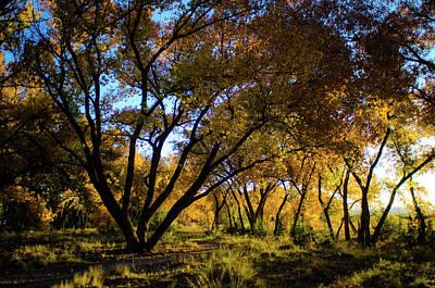 Photograph - Bosque Color by Jeff Phillippi
