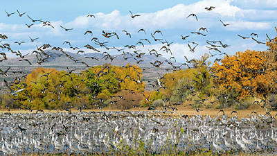 Photograph - Bosque Del Apache November by Van Sutherland
