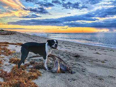 Photograph - Boston Terrier Sunrise 3 Delray Beach Florida by Lawrence S Richardson Jr