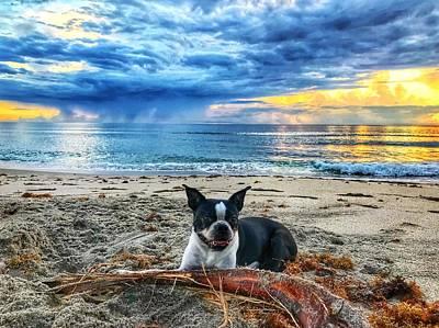 Photograph - Boston Terrier Sunrise Delray Beach Florida by Lawrence S Richardson Jr