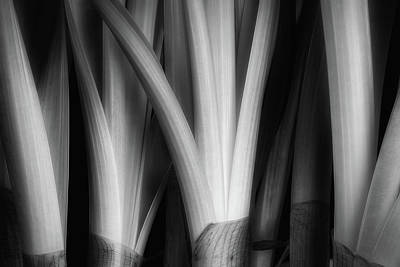 Black And White Art Photograph - Botanical Abstract by Tom Mc Nemar