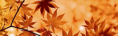 Photograph - Botany - autumn leaves by Fine Art Gallery