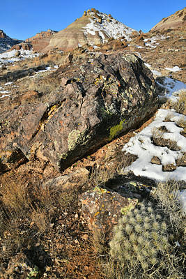 Photograph - Boulder And Cactus On Ruby Mountain by Ray Mathis