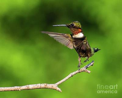 Abstract Airplane Art - Bouncing Ruby-throated Hummingbird by Cindy Treger