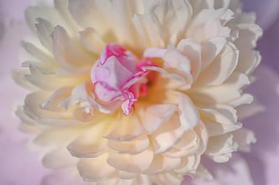 Photograph - Bowl Of Beauty. Peony Flower by Jenny Rainbow
