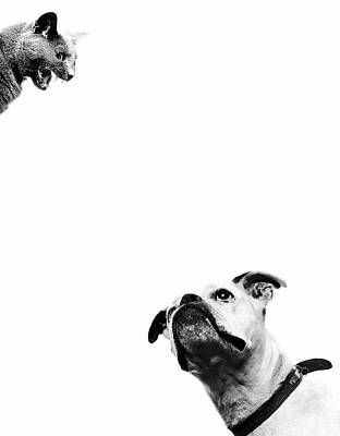 Photograph - Boxer Dog Looking At Cat Above Head by Robert Daly
