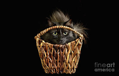 Photograph - Boyfriend In A Basket by Susan Warren