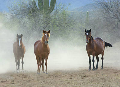 Photograph - Stallions Are Back In Town by Barbara Sophia Travels