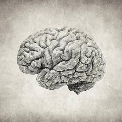 Drawing - Brain Drawing by Zapista Zapista