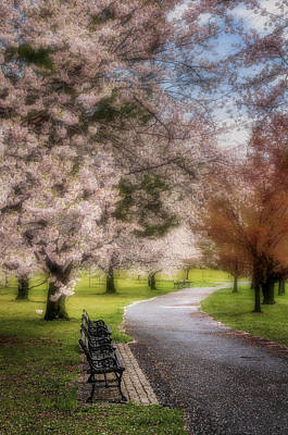 Photograph - Branch Brook Nj Cherry Blossoms by Susan Candelario
