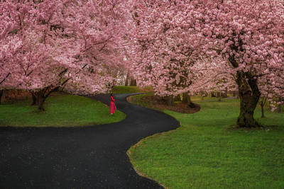 Photograph - Branch Brook Park Cherry Blossoms by Susan Candelario