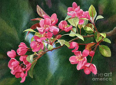 Branch Of Coral Colored Blossoms With Dark Background Original
