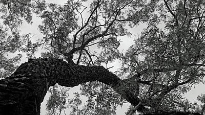 Wall Art - Photograph - Branches 2 by David G Paul