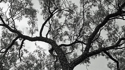 Wall Art - Photograph - Branches 3 by David G Paul