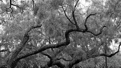 Wall Art - Photograph - Branches by David G Paul