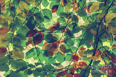Photograph - Branches Of Colorful Autumn Leaves by Michal Bednarek