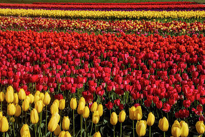 Photograph - Breathtaking Beautiful Tulip Fields by Garry Gay