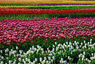 Photograph - Breathtaking Tulip Field by Garry Gay