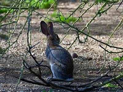 Photograph - Briar Rabbit by Sonja Jones