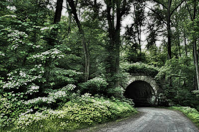 Photograph - Bridge Forest by Crystal Wightman