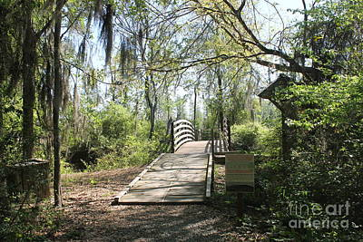 Wall Art - Photograph - Bridge In Swamp by Don Small Jr