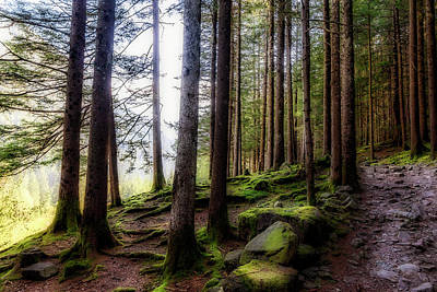 Photograph - Bright Forest by Roberto Pagani