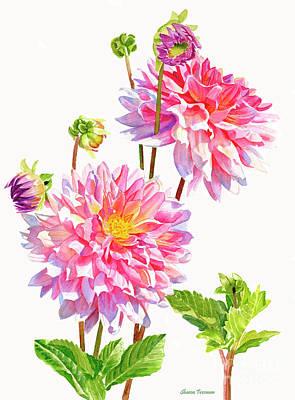Bright Pink Dahlias With Buds Original
