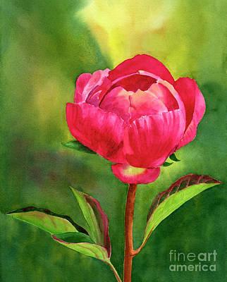 Bright Red Peony Blossom Original