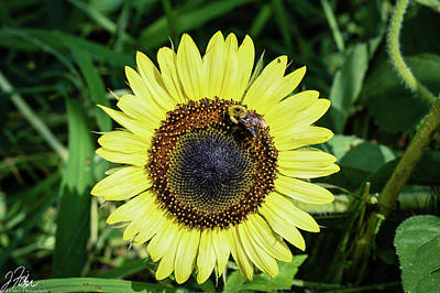 Wall Art - Photograph - Bright Sunflower W/ Bee by James Fisher