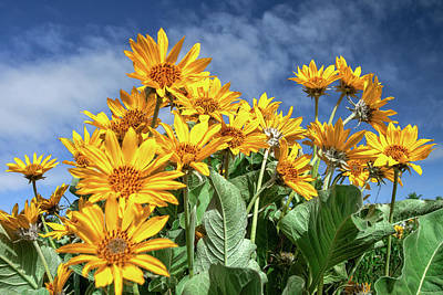 Photograph - Bright Yellow Flowers by Todd Klassy