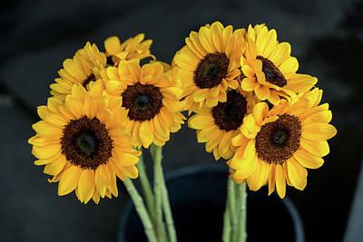 Photograph - Bright Yellow Sunflowers by Ian Robert Knight