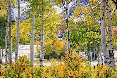 Photograph - Brilliant Autumn by Leland D Howard