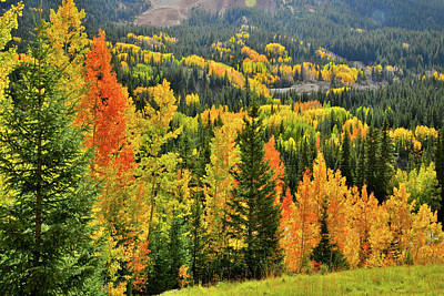 Photograph - Brilliant Colorado Fall Colors by Ray Mathis