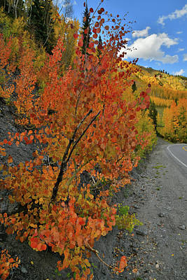 Photograph - Brilliant Colored Aspens Along Highway 550 by Ray Mathis