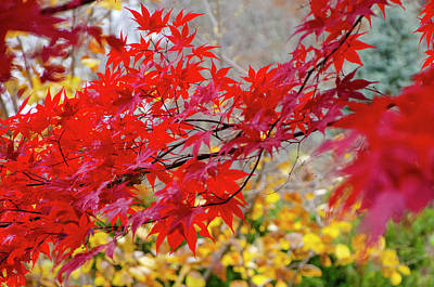 Photograph - Brilliant Fall Color by Kristin Hatt