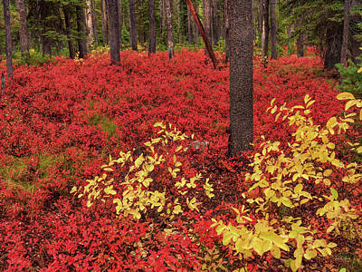 Photograph - Brilliant Forest Red by Leland D Howard