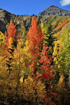 Photograph - Brilliantly Colored Aspens At Red Mountain Pas by Ray Mathis